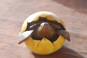 accessoires-de-maison-eclosion-d-une-tortue-sortant-de-so-4083063-copie-de-dsc-000011-56227_big[1]