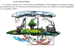 Cycle.Azote