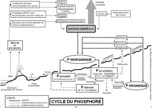 Cycle.Phosphore-2