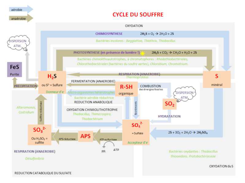 Cycle.Soufre