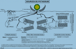 Sources.Potassium